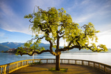Idyllic Lakeside Park and Isola Bella, Borromean Islands, Lake Maggiore, Piedmont, Italy Photographic Print by Doug Pearson
