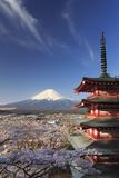 Japan, Yamanashi Prefecture, Fuji-Yoshida, Chureito Pagoda and Mt Fuji During Cherry Blossom Season Photographic Print by Michele Falzone