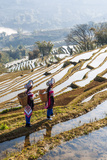 Young Women of the Hani Ethnic Minority Walking in the Rice Terraces, Yuanyang, Yunnan, China Photographic Print by Nadia Isakova