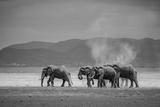 Amboseli Park,Kenya,Africa a Family of Elephants in Amboseli Kenya Photographic Print by  ClickAlps