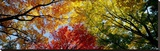 Colorful Trees in Fall, Autumn, Low Angle View Stretched Canvas Print by  Panoramic Images