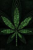 99 Cannabis Terms Obrazy