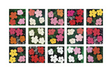 Andy Warhol - Flowers (various), 1964 - 1970 Digitálně vytištěná reprodukce