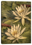 Lotus Dream II Stretched Canvas Print by Dano