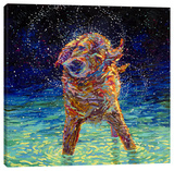 Midnight Swim Stretched Canvas Print by Iris Scott