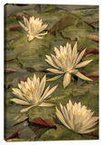 Lotus Dream Stretched Canvas Print by Dano