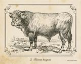 Farm Bull II Posters by Gwendolyn Babbitt