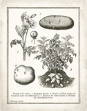 French Potatoes Poster by Babbitt Gwendolyn