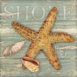 Beach Shells Starfish Prints by Julie Paton
