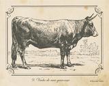 Farm Bull I Prints by Gwendolyn Babbitt