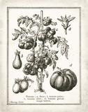 French Tomatoes Poster von Babbitt Gwendolyn