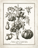 French Tomatoes Poster by Gwendolyn Babbitt