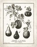French Gourds Posters by Babbitt Gwendolyn