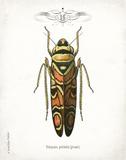Beetle III Prints by Babbitt Gwendolyn