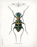 Beetle I Art by Babbitt Gwendolyn