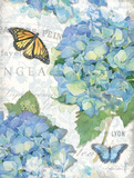 Garden Hydrangea II Posters by Paton Julie