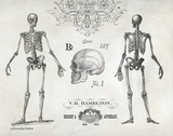 Elegant Skeletons Prints by Babbitt Gwendolyn