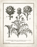 French Artichokes Print by Babbitt Gwendolyn