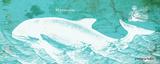 Caribbean Whale II Prints by Gwendolyn Babbitt