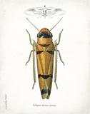 Beetle II Posters by Babbitt Gwendolyn