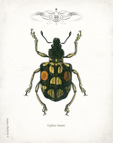 Beetle IV Poster by Babbitt Gwendolyn
