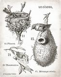 French Birdnests Prints by Babbitt Gwendolyn