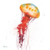 Deep Sea Jellies II Prints by Brent Paul