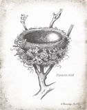 French Bird Nest II Posters by Babbitt Gwendolyn