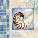 Mosaic Shell Collage V Prints by Brent Paul