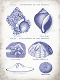 Indigo Shells I Posters by Gwendolyn Babbitt