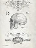 Elegant Skeleton Skull Prints by Gwendolyn Babbitt