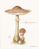 Mushroom I Posters by Gwendolyn Babbitt