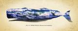Sperm Whale Prints by Alan Hausenflock