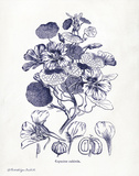 Indigo Botanical IV Prints by Babbitt Gwendolyn