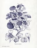 Indigo Botanical IV Prints by Gwendolyn Babbitt