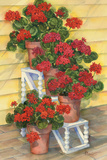 Spindle Shelf Geraniums Print by Paul Brent