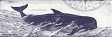 Whale on Cream I Prints by Gwendolyn Babbitt