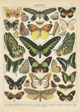 Papillons II Prints by Babbitt Gwendolyn