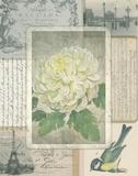 Vintage Chrysanthemum Poster by Washburn Lynnea