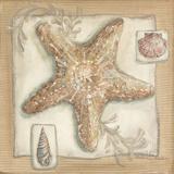 Sandy Starfish Prints by McRostie Kate