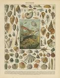 Mollusques Print by Babbitt Gwendolyn
