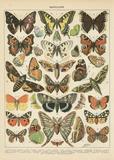 Papillons 1 Poster von Babbitt Gwendolyn