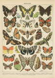 Papillons I Poster by Babbitt Gwendolyn