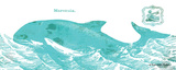 Whale on White II Posters by Gwendolyn Babbitt