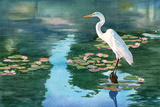 Lakeside Egret Posters by Washburn Lynnea