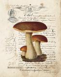 Mushroom II Prints by Gwendolyn Babbitt