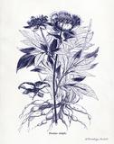 Indigo Botanical III Prints by Babbitt Gwendolyn