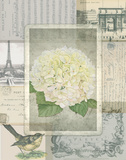 Vintage Hydrangea Posters by Washburn Lynnea