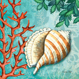 Conch Posters by Wright Sydney