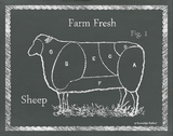Sectioned Sheep Art by Gwendolyn Babbitt